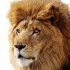 「Kyoko」さんに優しく注意してほしい--Lionで警告音を変える - builder by ZDNet Jap