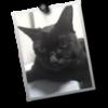 長靴編集所: Mac OS X アプリケーション: Picture Frame